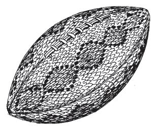 rattlerfootball